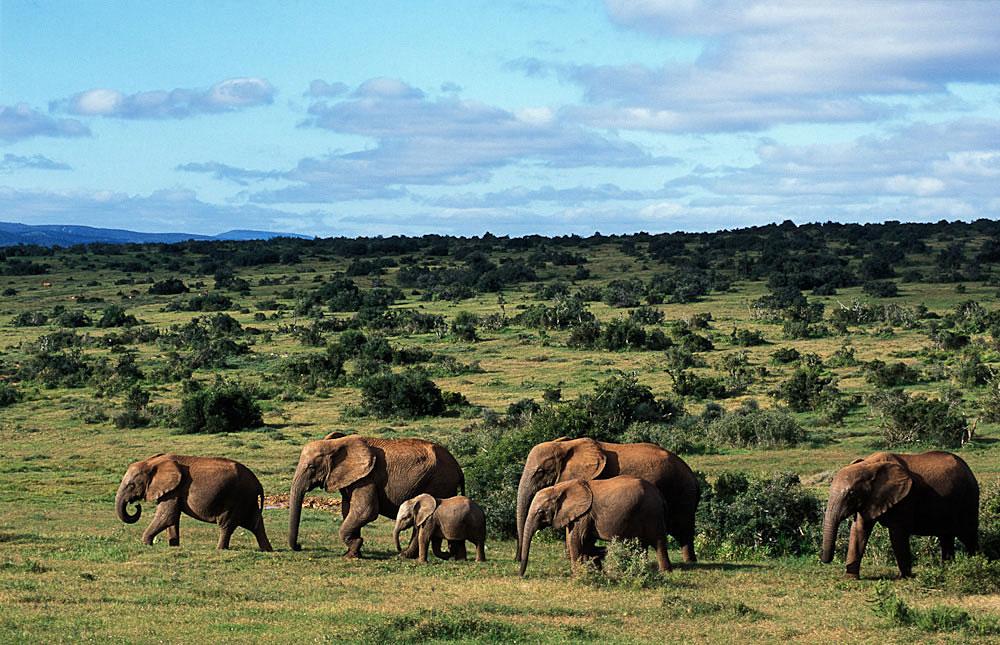 Garden Route Amp Addo Elephant Park 5 Day Tour