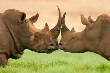 eastern-cape-safari-3-days-rhino