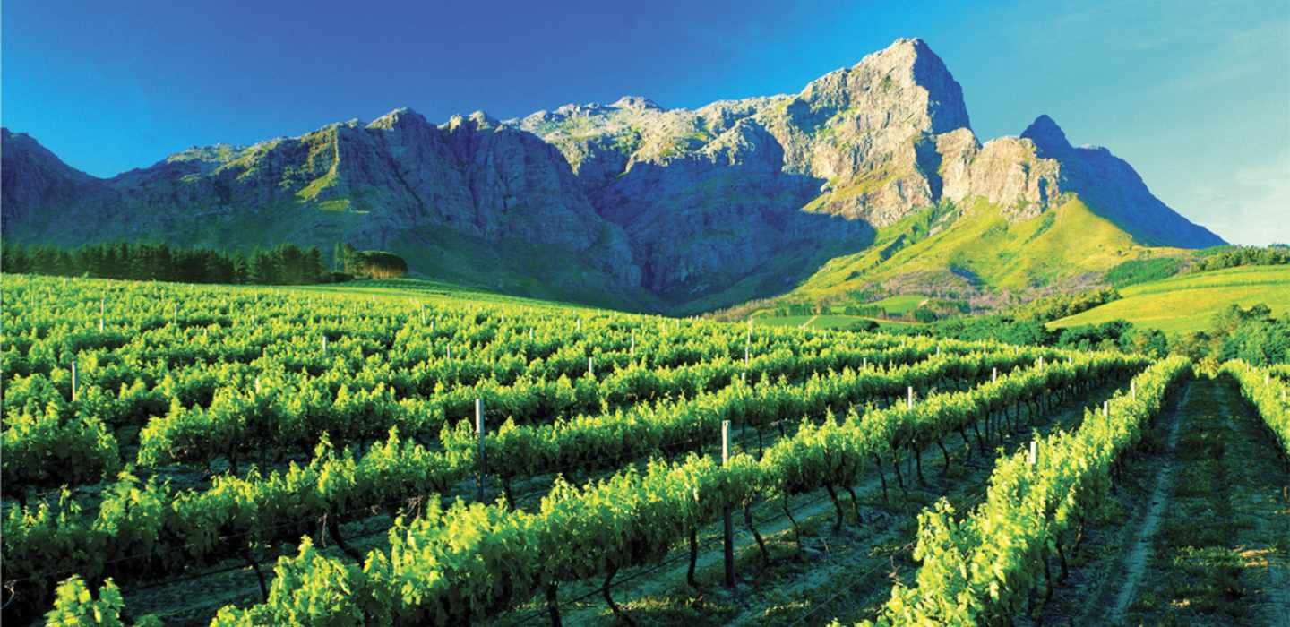 Cape Winelands Tour Half Day