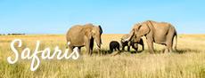 capetown-safari