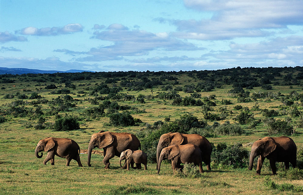 Garden Route Amp Addo Elephant Park 5 Day Tour