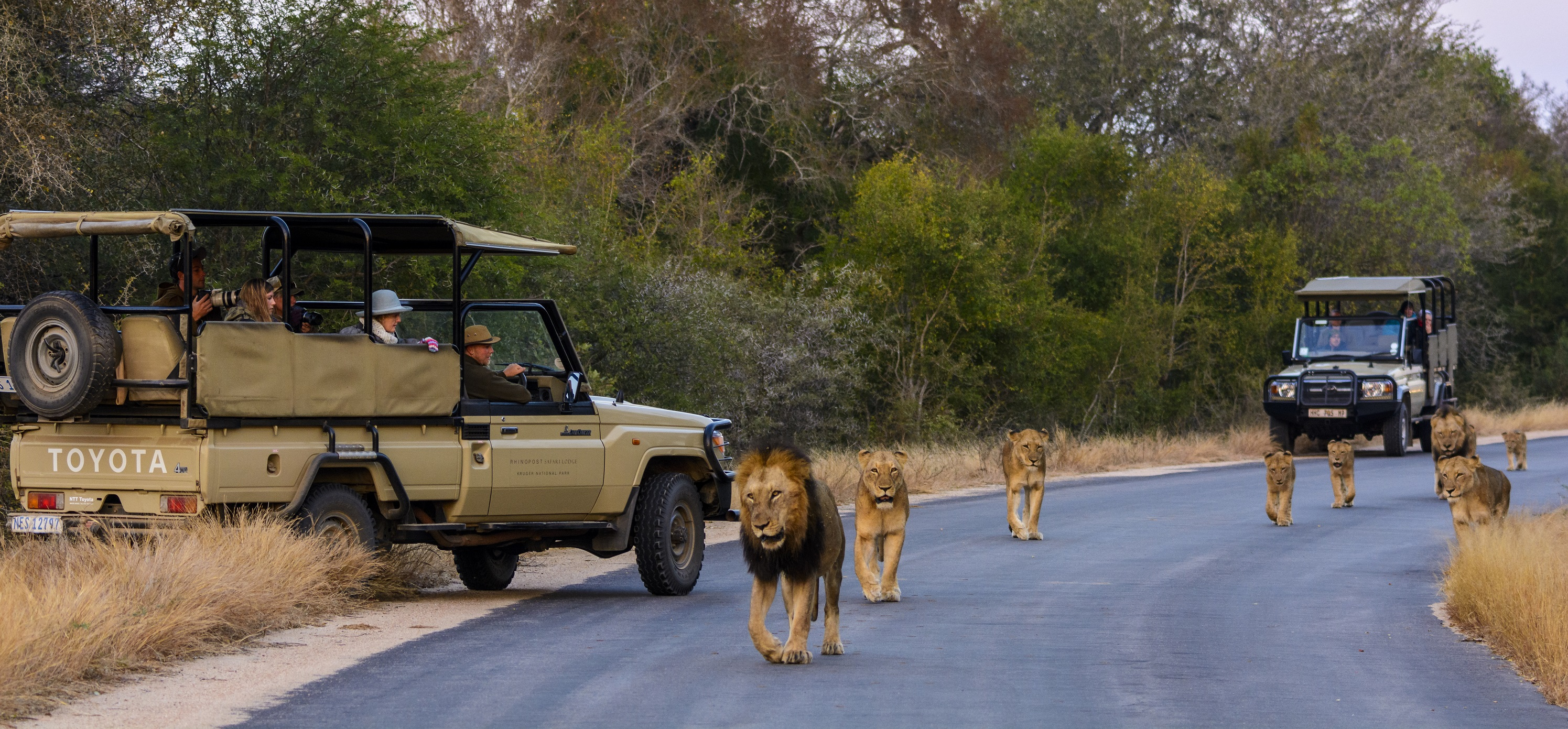a guidebook to kruger national park in south africa Kruger national park is undoubtedly one of the world's best game parks, where teeming game roams freely over an area the size of wales or israel visiting kruger is likely to be one of the.