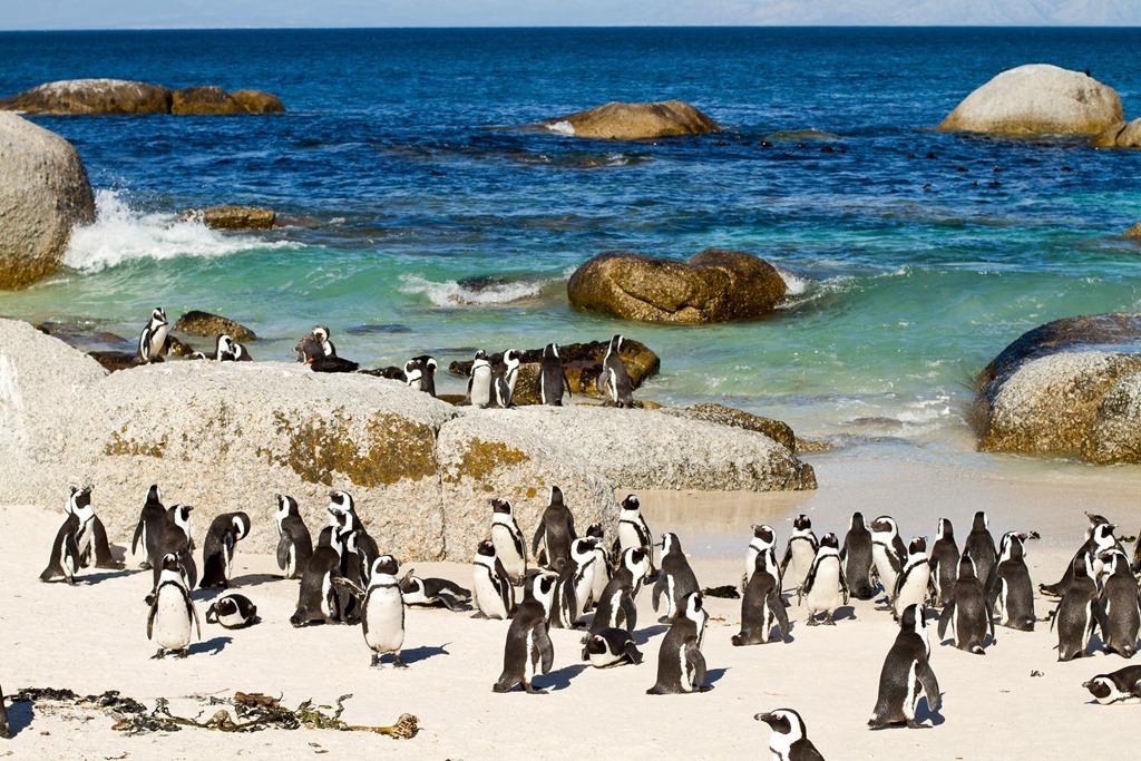 Boulder Beach Cape Town Tour