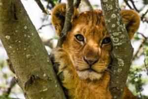 Cape Town Safari – 2 Days (Guesthouse)