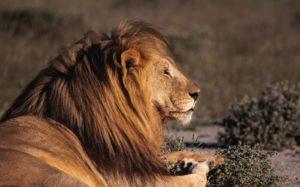 Cape Town Safari – Full Day