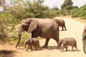 Kruger Park Big 5 – 4 Days