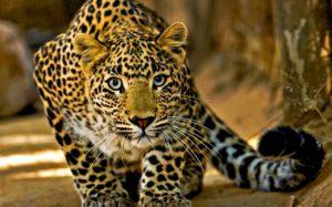 Kruger Park Safari Private Game Reserve – 3 Days