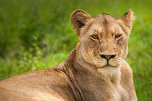 Kruger Park – 3 Days Safari