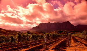 Cape Winelands Tour – Half Day