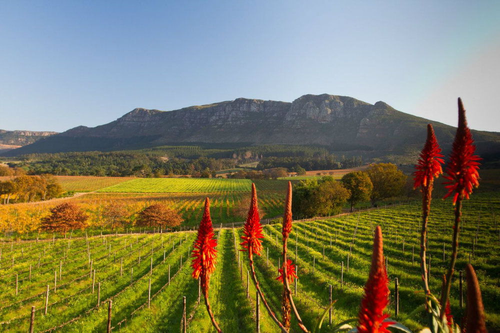 4-must-sees-winelands-cape-town-constantia