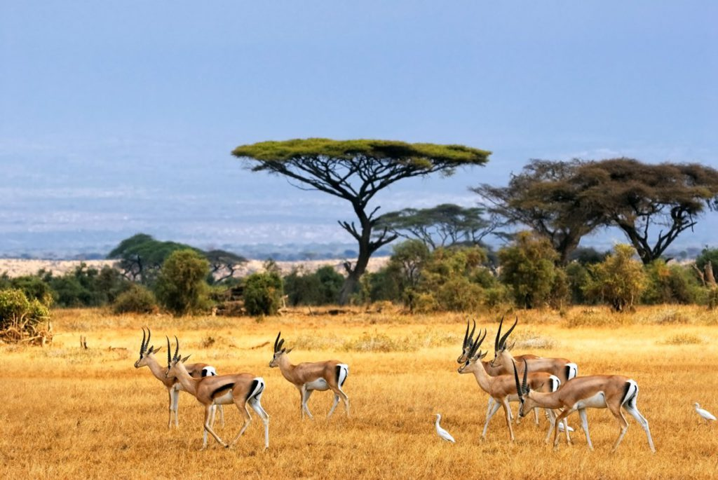 safari parks in south africa