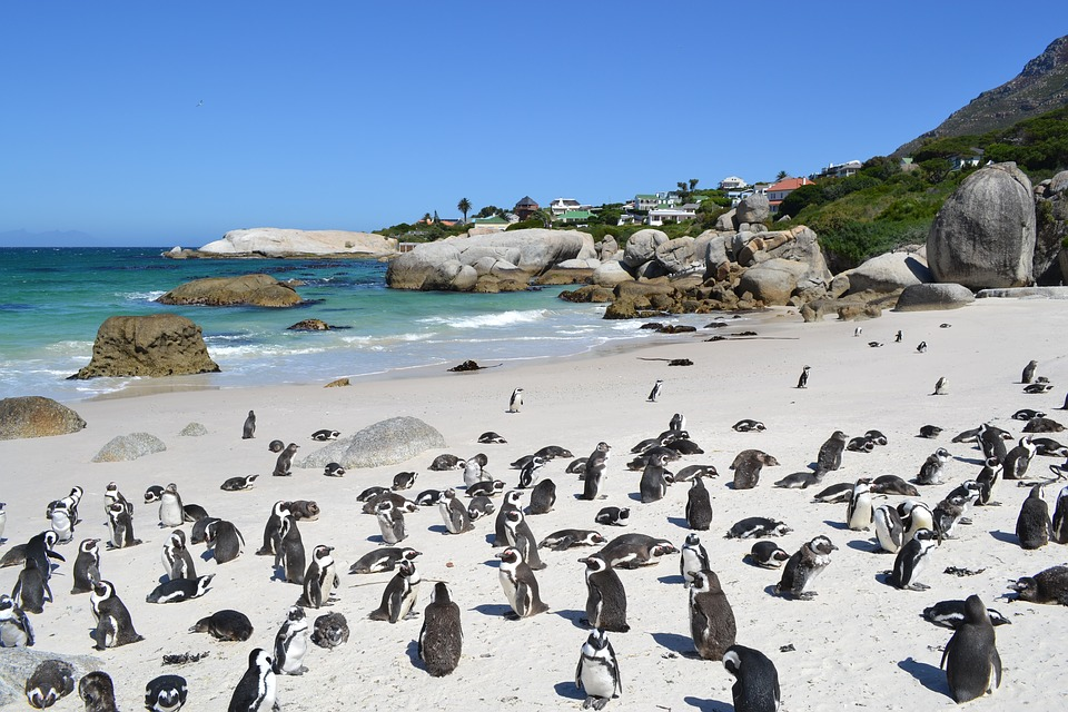 5-places-see-animals-cape-town-boulders-beach