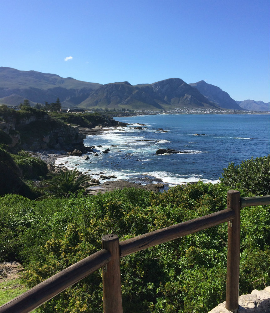 5-places-see-animals-cape-town-hermanus