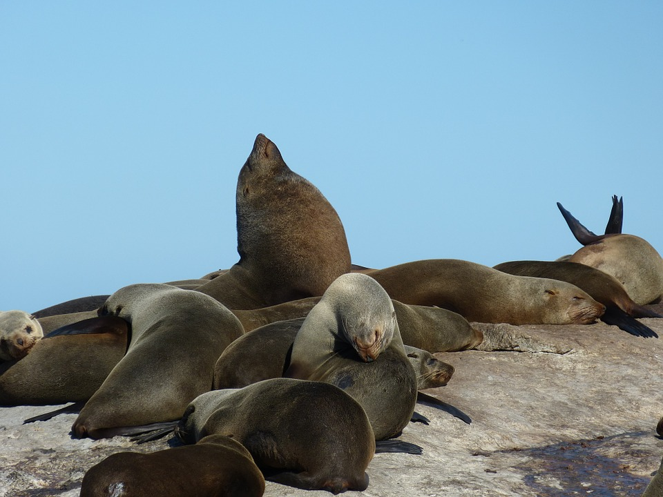 5-places-see-animals-cape-town-seals