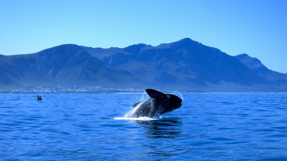 5-places-see-animals-cape-town-whales