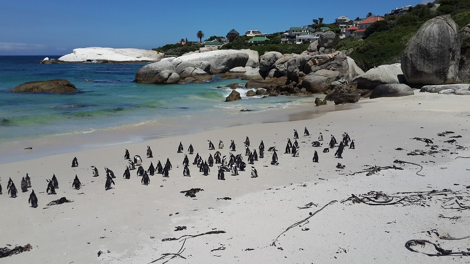 best-cape-town-10-pictures-penguins