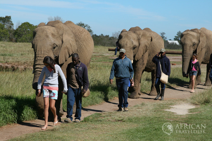elephant-bush-walk-activity-south-africa