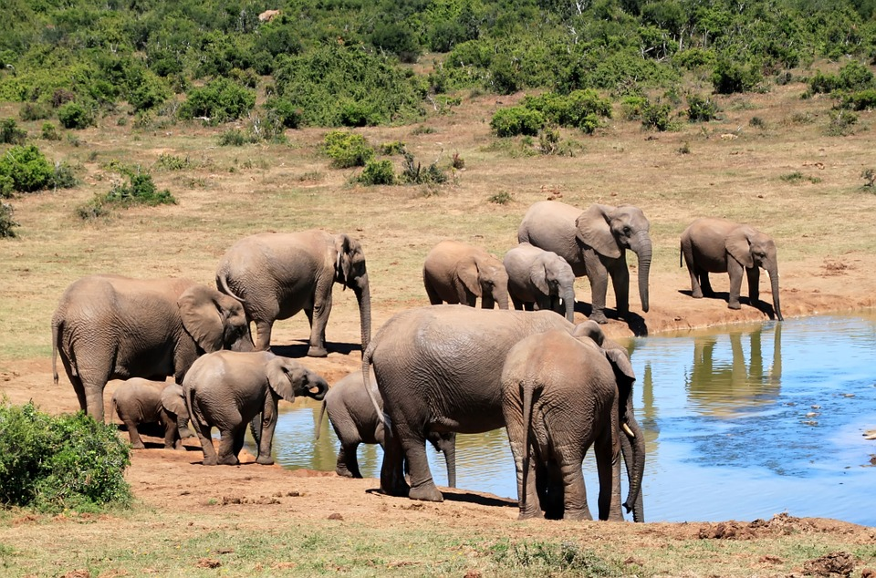 herd-elephant-south-africa