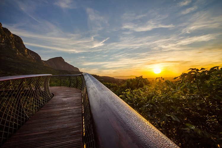 kirstenbosch-tree-canopy-path-sunset