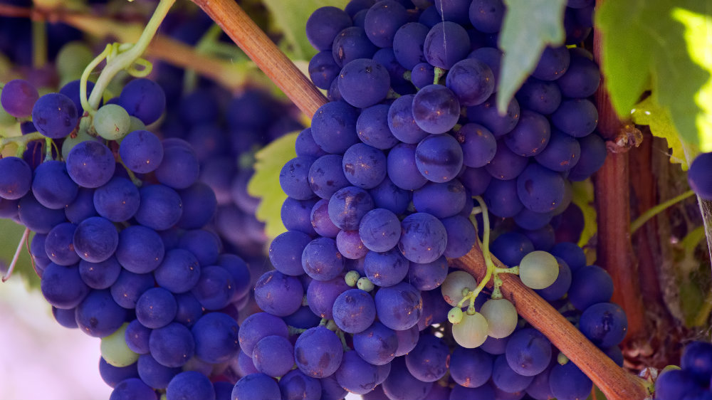origins-winelands-cape-town-grapes-1000