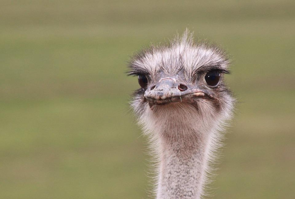 ostrich-face-safari-south-africa