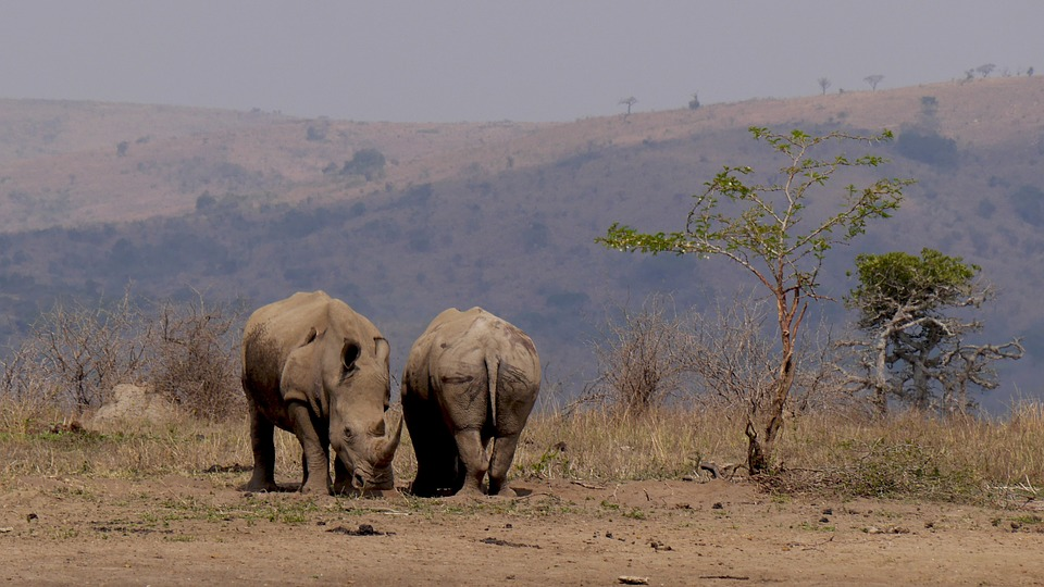 rhino-bush-south-africa-safari