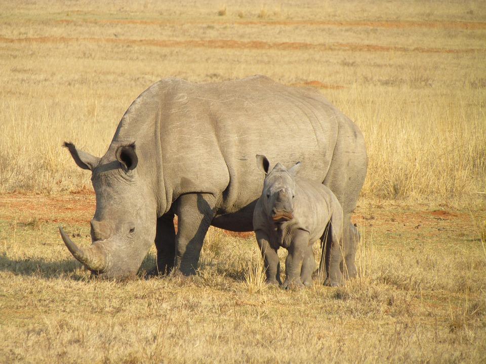rhino-young-savannah