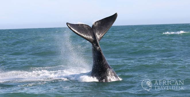 sailing-whales-winter-cape-town