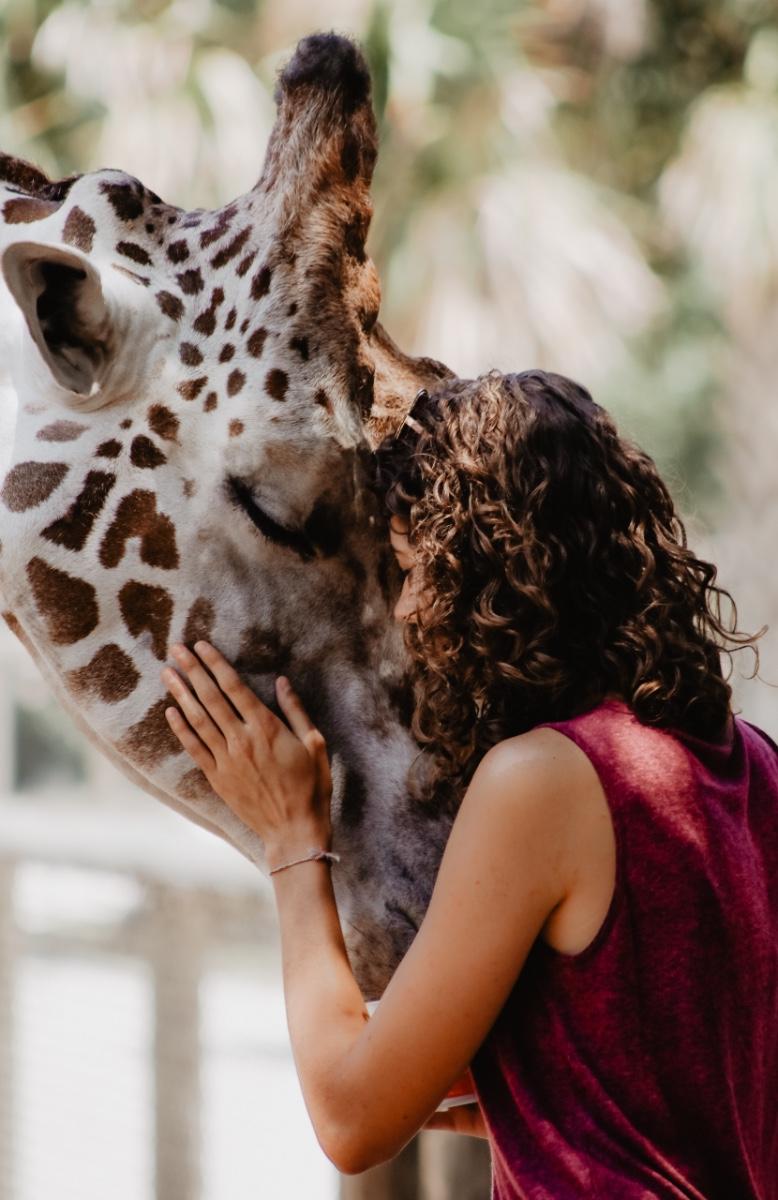Giraffe - Cape Town Safari