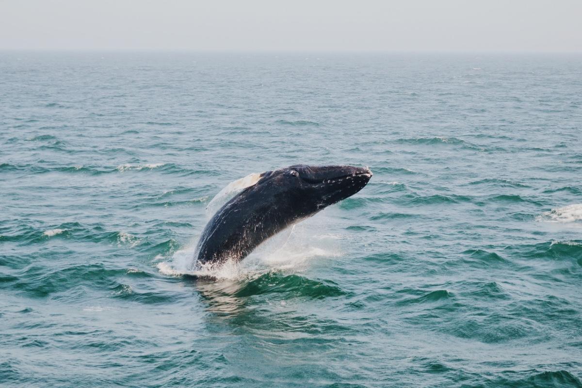 Cape Town Whale Tour