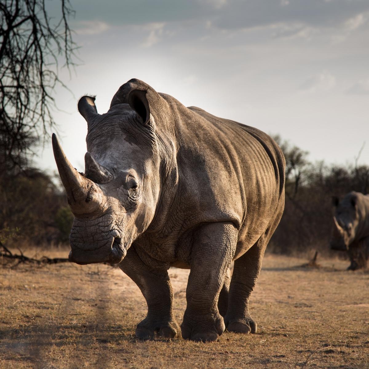Rhino - Cape Town Safari