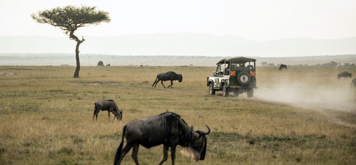 Safari in Cape Town