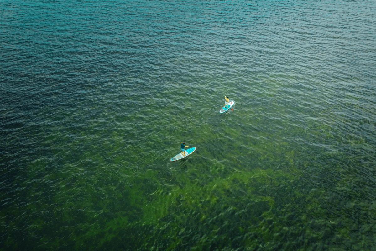 SUP - Cape Peninsula