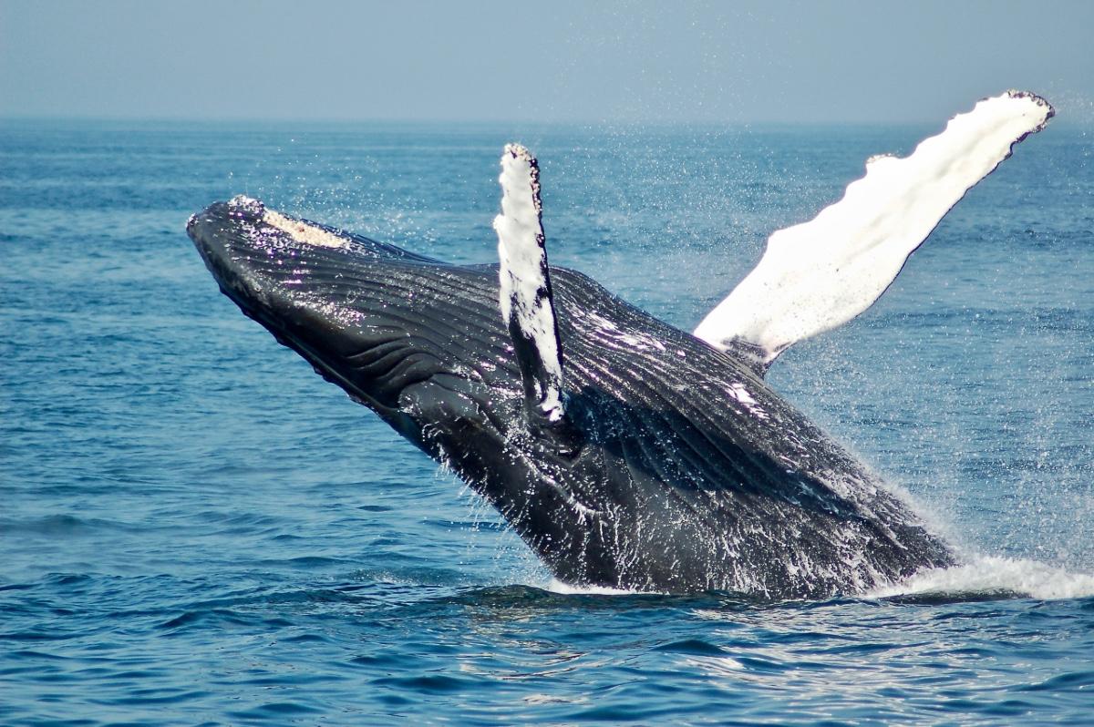 whale - Cape Town Whale Tour