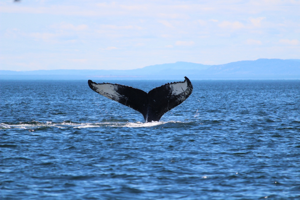 whale-tail-garden-route